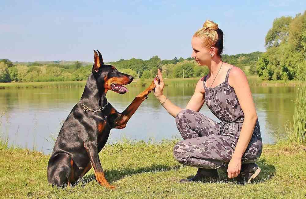 Hundeerziehung ist nicht schwierig!