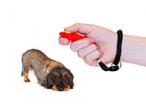 Keine drakonische Bestrafung des Hundes!