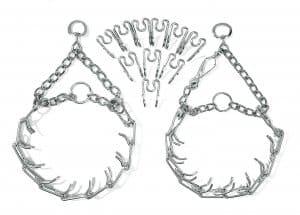 Stachelhalsband - Stachelwürger