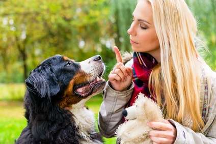 Verständnis zwischen Mensch und Hund
