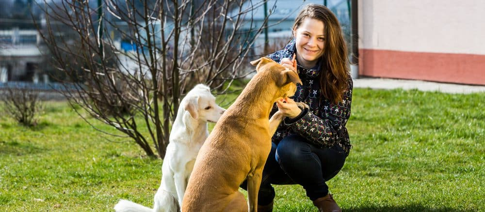 Hunde auf dem Rasen mit Unsichtbarer Hundezaun