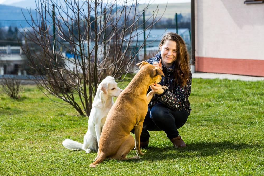 Unsichtbarer Hundezaun - Erziehungshalsband.eu