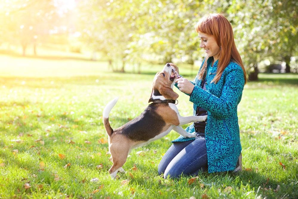 Hundeerziehung ohne Erziehungshalsband